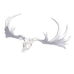 Zoology skull